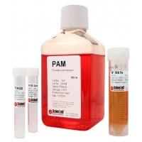 前脂肪细胞培养基 PAM