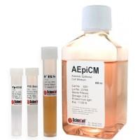 肺泡上皮细胞培养基 AEpiCM