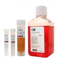 软骨细胞培养基 CM
