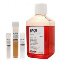 髓核细胞培养基 HNPC