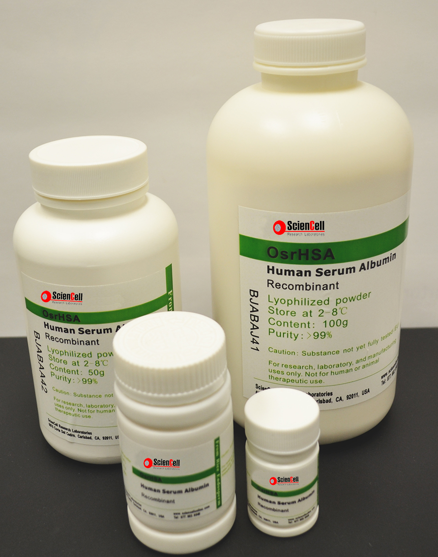 重组人血清白蛋白  rHSA