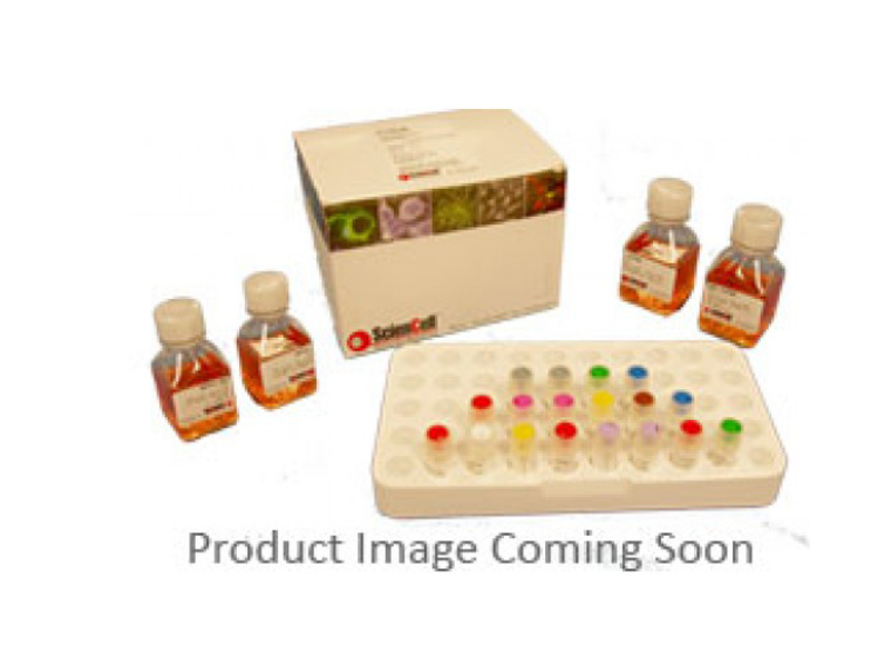 嘌呤霉素 PURO-10