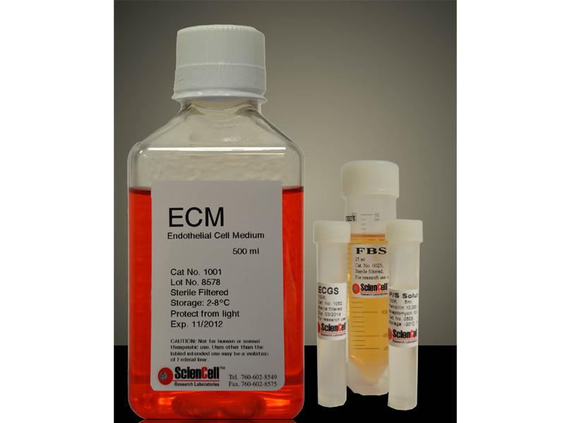 无酚红-内皮细胞培养基 ECM-prf